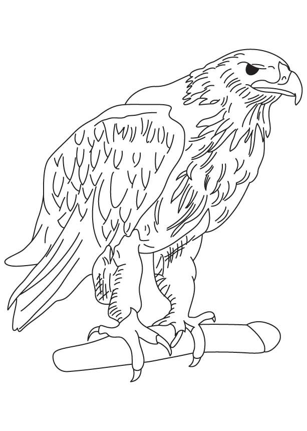 Golden Eagle Coloring Page At Getdrawings Com Free For Personal