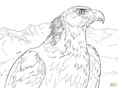 236x177 Golden Eagle Coloring Page Eagle Coloring Pages