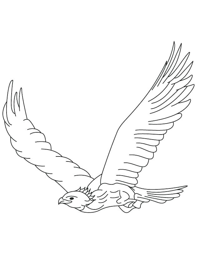630x810 Harpy Eagle Coloring Page Eagle Color Page Golden Eagle In Flight