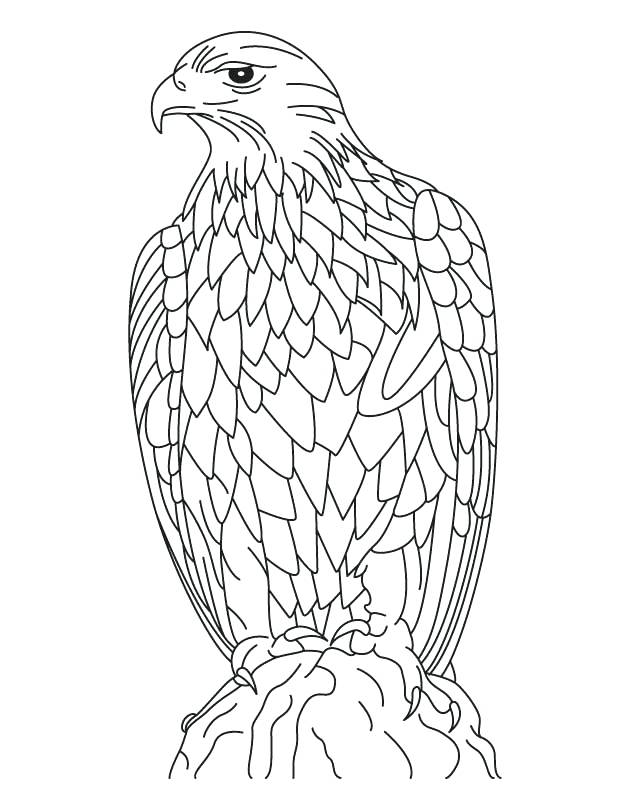 630x810 Bald Eagle Coloring Page Silent Golden Eagle Coloring Page Bald