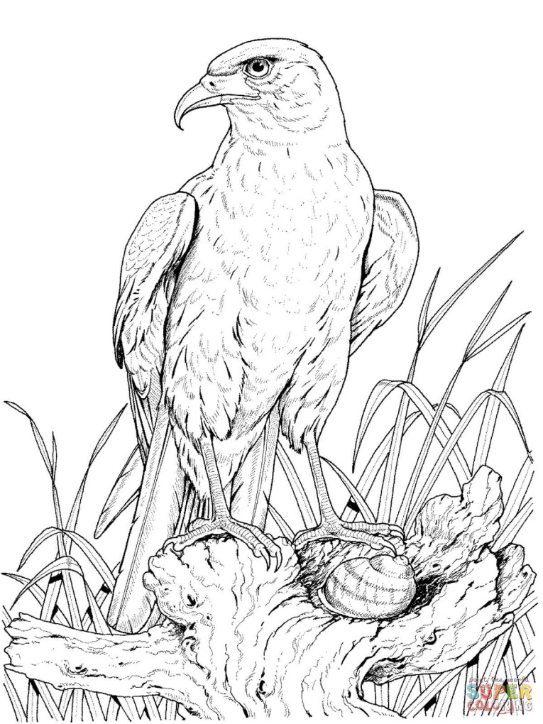 765x1020 Perched Golden Eagle Coloring Page Free Printable Coloring Pages