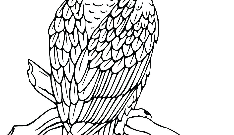 940x544 Printable Bald Eagle Coloring Pages For Kids Bald Eagle Coloring