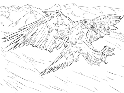 430x323 Click To See Printable Version Of Golden Eagle Attacks Coloring