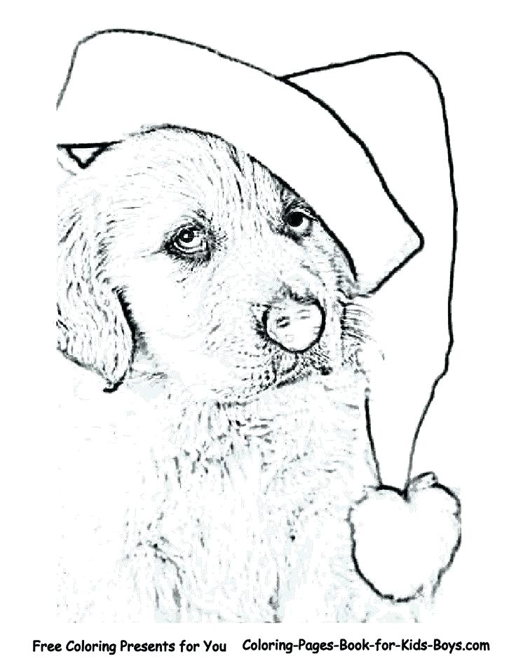 736x952 Golden Retriever Coloring Pages Dog Coloring Pages Pictures That