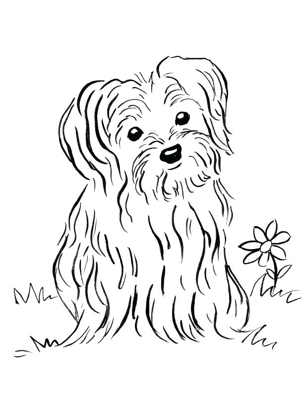 613x794 Labrador Retriever Coloring Pages Gallery Of Golden Retriever