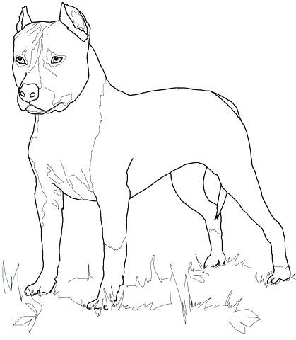 419x480 Retriever Coloring Pages Retriever Coloring Page Retriever