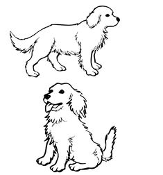 235x252 Coloring Pages Golden Retriever Coloring Pages