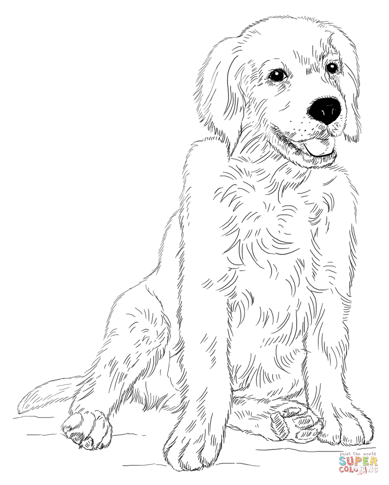 767x955 Golden Retriever Coloring Pages Golden Retriever Coloring Page