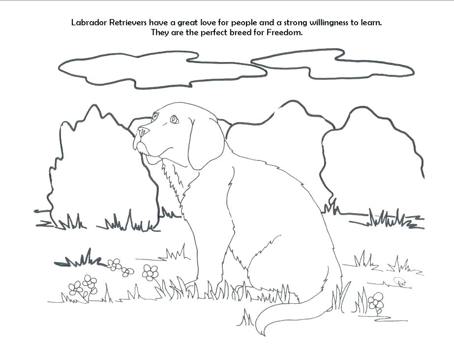923x713 Golden Retriever Coloring Pages