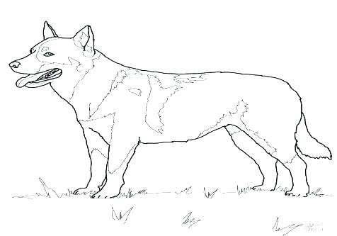 476x333 Golden Retriever Coloring Pages Beautiful Shepherd Coloring Page