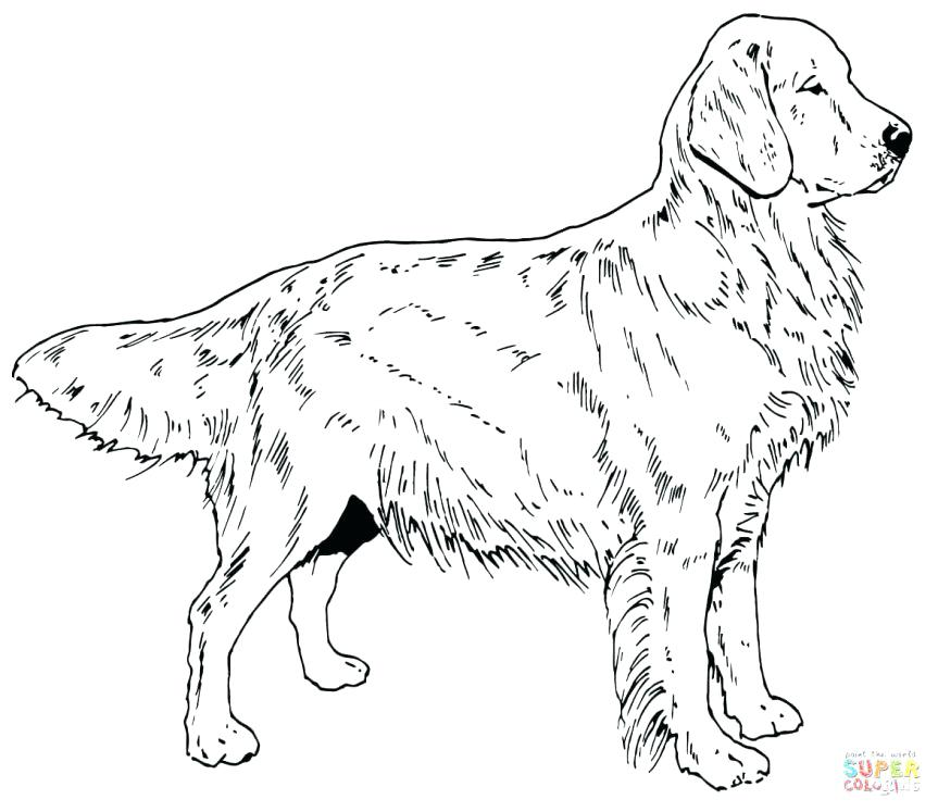 863x747 Labrador Retriever Coloring Pages Coloring Pages Golden Retriever