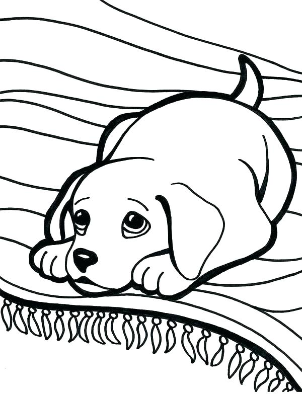 600x783 Labrador Coloring Pages