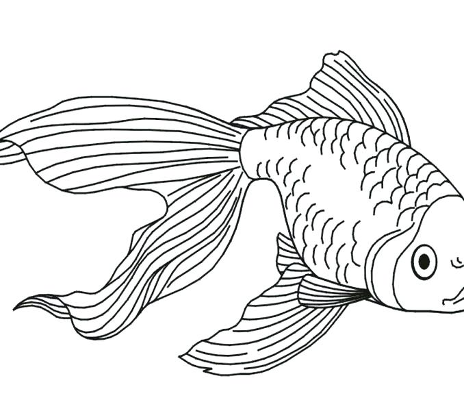 The best free Goldfish coloring page images. Download from ...