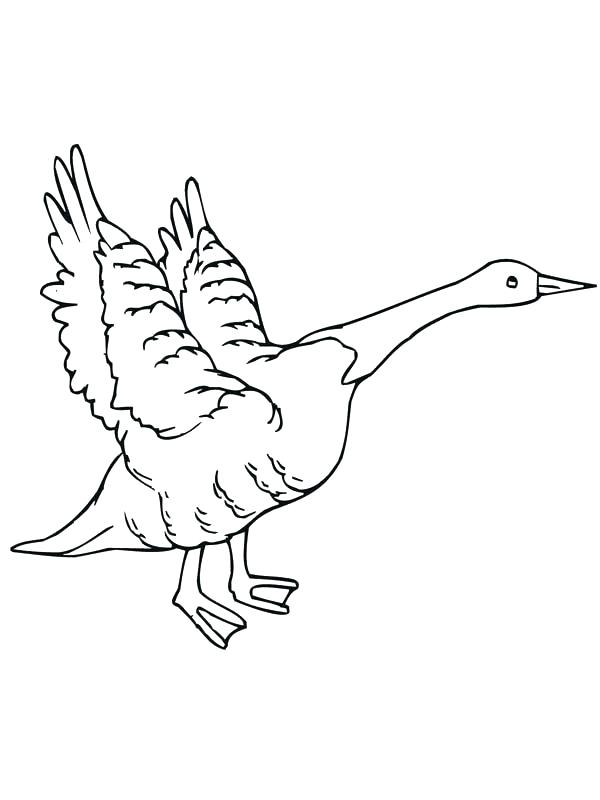 600x800 Flying Goose Coloring Page Canada Goose Coloring Page Flying Goose