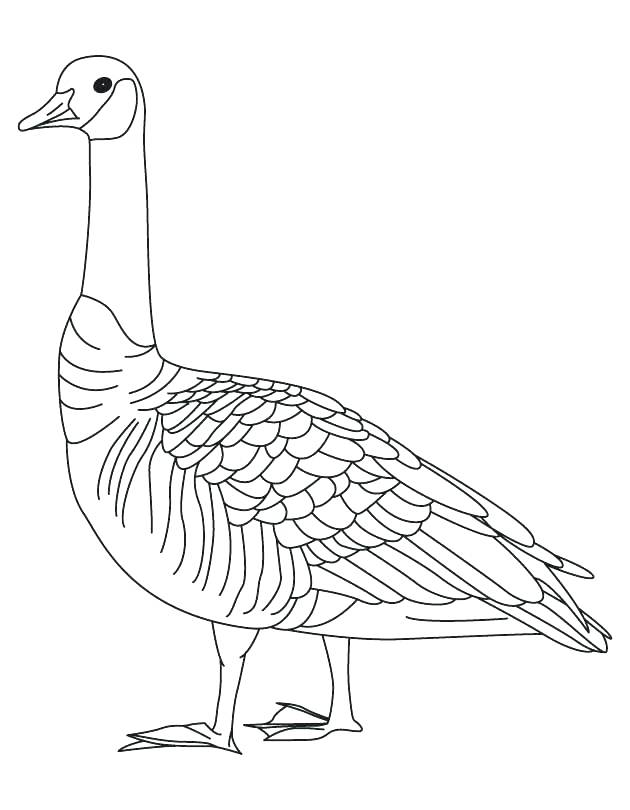 630x810 Goose Coloring Page Goose Coloring Page Barren Goose Coloring Page