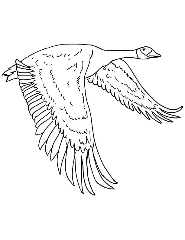 612x792 Goose Coloring Page Goose Coloring Page Download Free Pages Golden