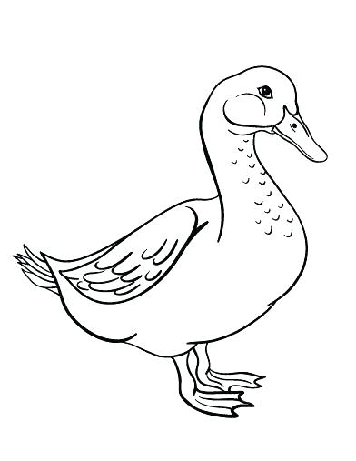 392x507 Goose Coloring Page Snow Goose Coloring Page Best Pages
