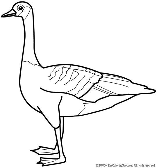 540x577 Goose Coloring Pages Goose Free Printable Coloring Pages