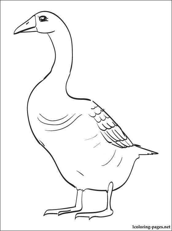 560x750 Goose Printable Coloring Page Coloring Pages