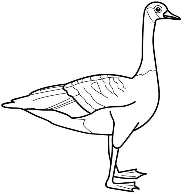 600x641 Picture Of Goose Coloring Page