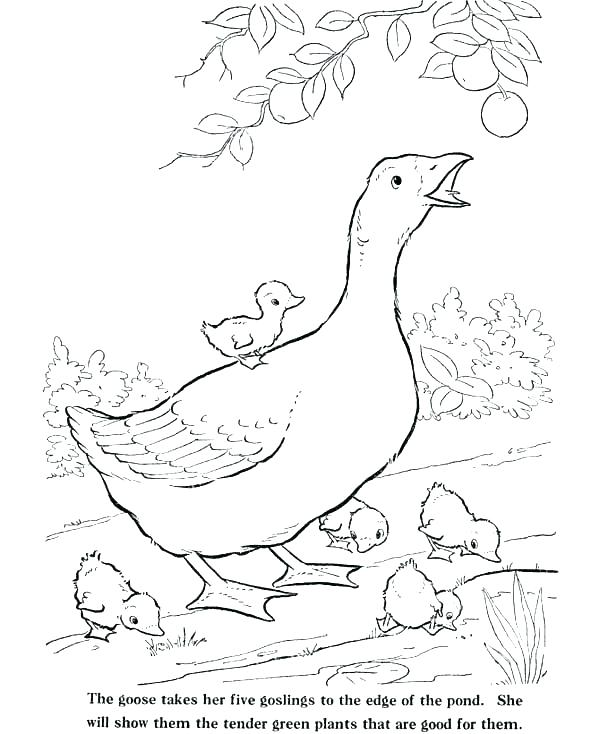 600x734 Mother Goose Coloring Pages Free Printable