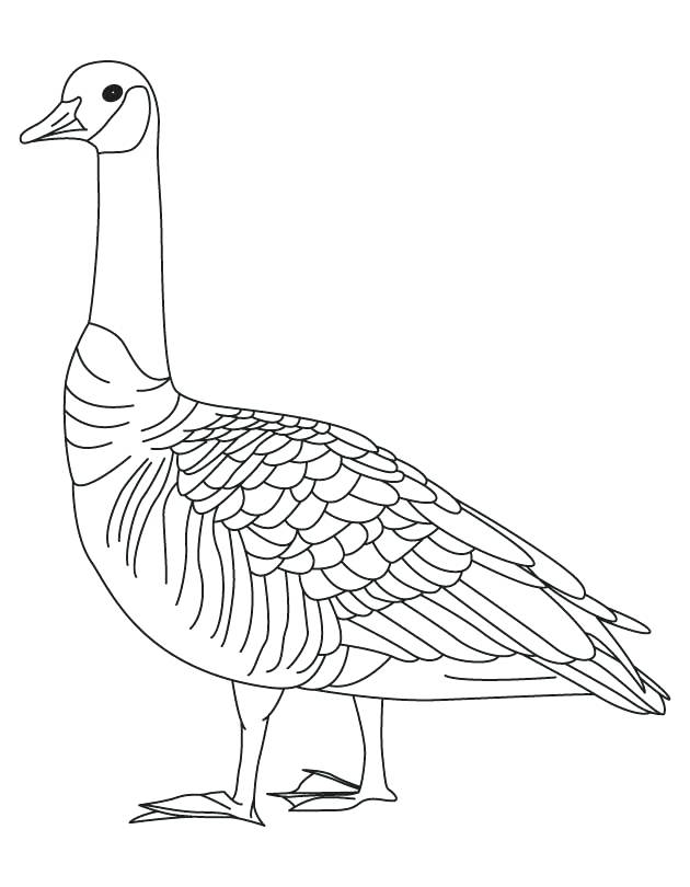 630x810 Goose Coloring Page Barren Goose Coloring Page Goosebumps Coloring