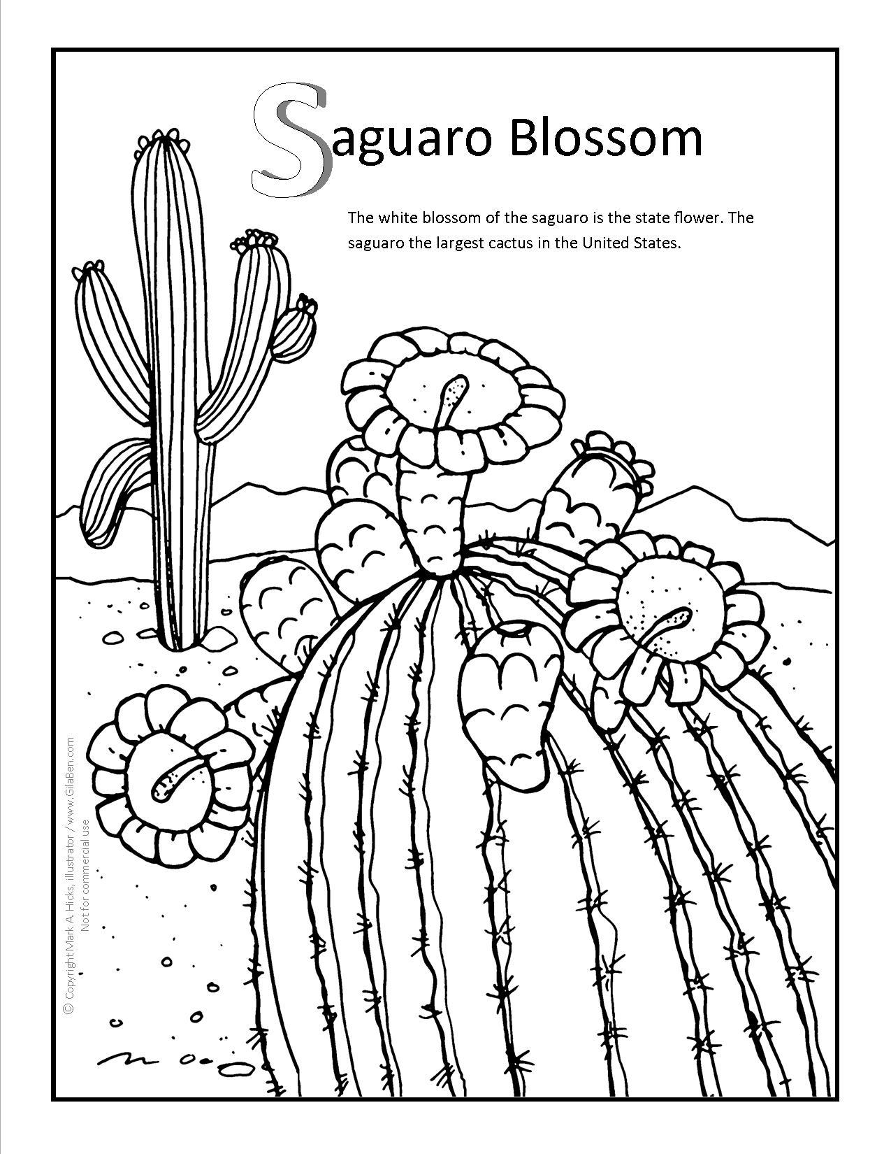 1275x1650 Saguaro Blossom Coloring Page