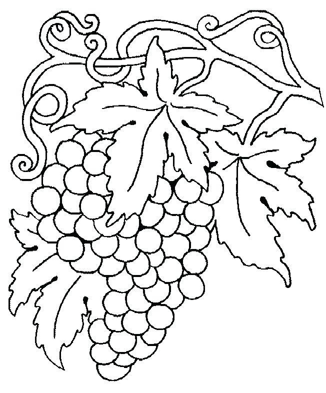 652x786 Grape Coloring Page Grapes Coloring Page Grape Vine Coloring