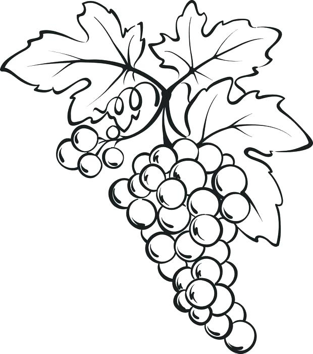 620x700 Grape Coloring Page Grapes Coloring Pages Coloring Page Of A Bunch