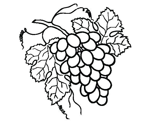 600x470 Grapes Coloring Page Bunch Of Grapes Coloring Page Grape Vine
