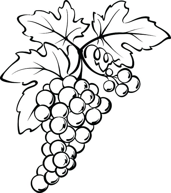 600x677 Grapes Coloring Page Grape Leaves Coloring Page