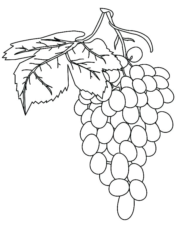 600x776 Grapes Coloring Page Grapes Coloring Page Grapes Coloring Pages