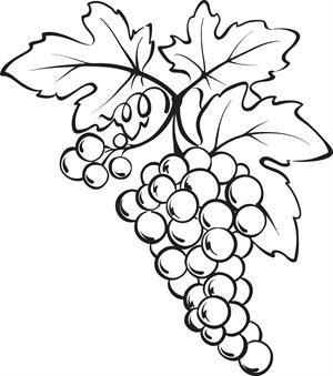 300x339 Bunch Of Grapes Coloring Page Food Theme