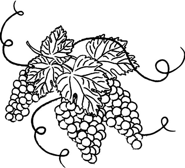 600x546 Grapes With Leaves Coloring Pages Color Luna