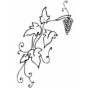 300x300 Grapevine Coloring Page