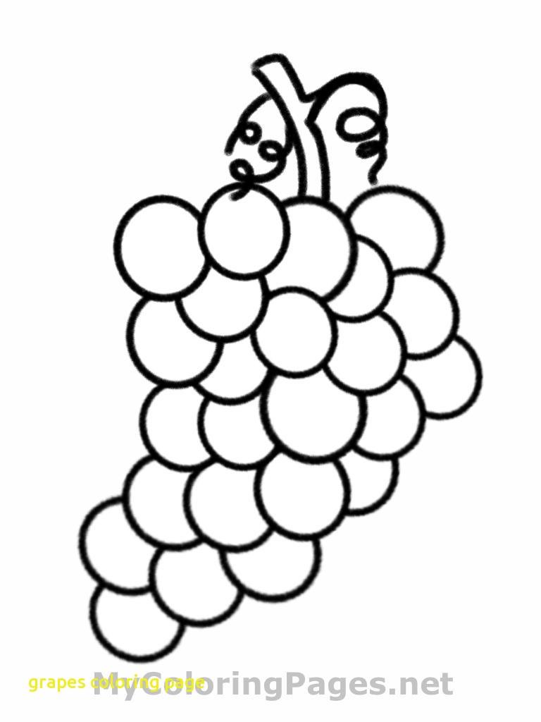 768x1024 Purple Grapes Coloring Page Grape Vine Free Printable Pages