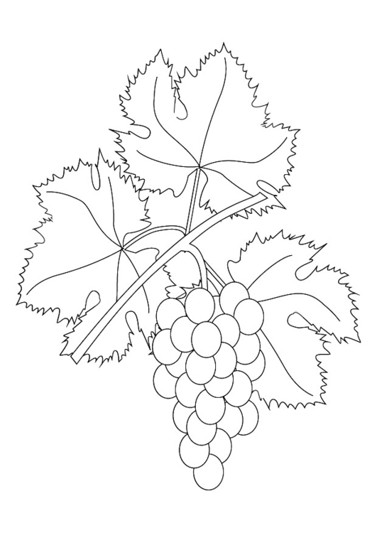 531x750 Coloring Page Grapevine