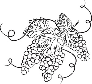 300x273 Free Grapes Clipart Image Food Clipart
