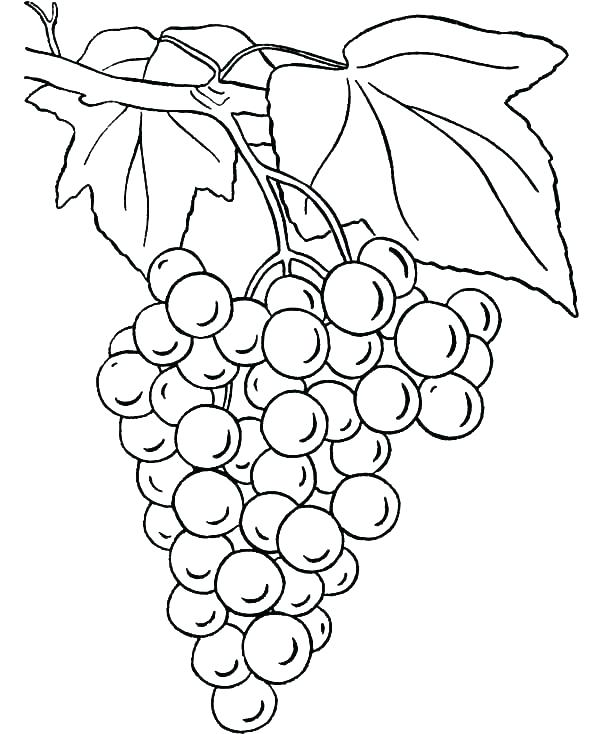 600x734 Grape Coloring Page Coloring Page Corn Stalk Coloring Page Corn