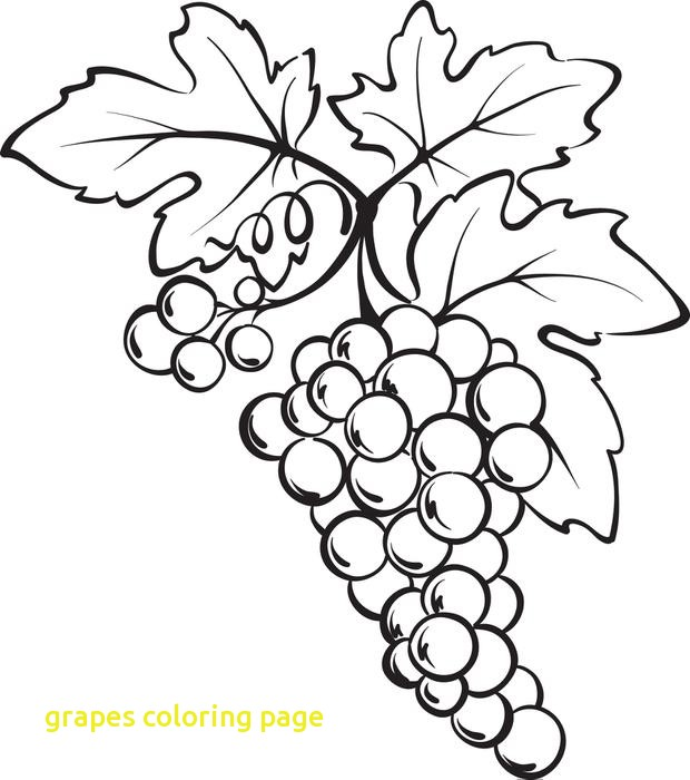 620x700 Grapes Coloring Page With Free Printable Bunch Of Grapes Coloring