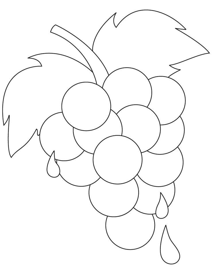 738x954 Grapes Coloring Pages Grape Vine Colouring Page