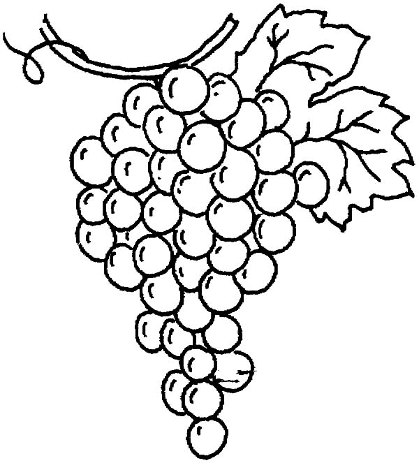 600x663 Drawing Grapes Coloring Pages Color Luna