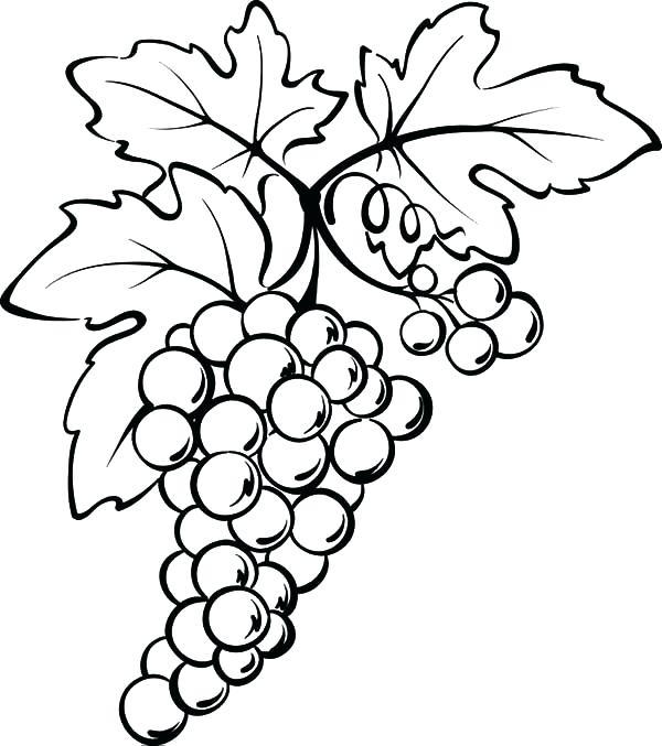 600x677 Grape Coloring Page Grape Leaf Coloring Page Photograph Grapes