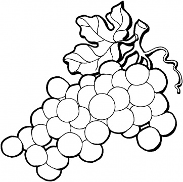 362x360 Grapes Coloring Page