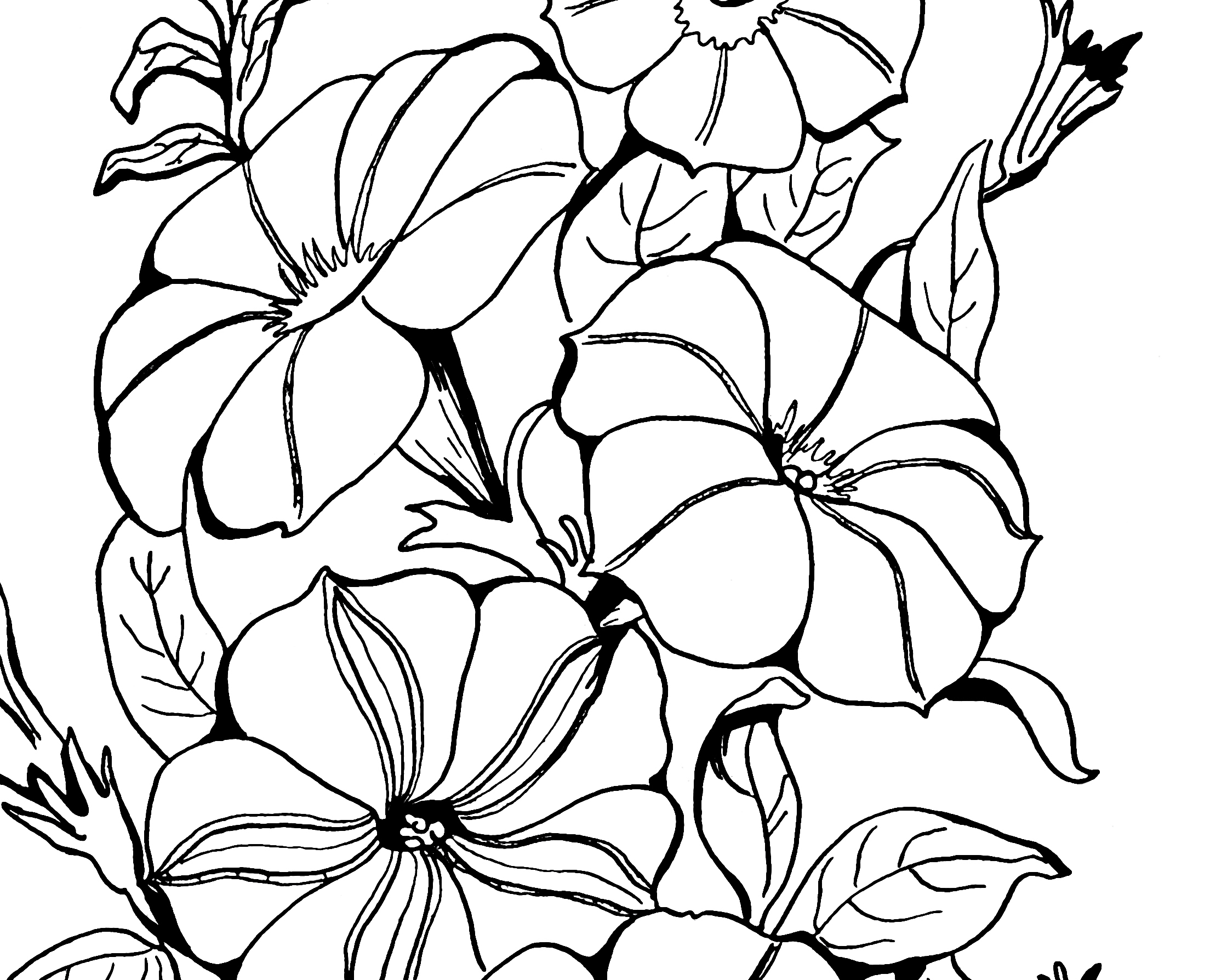 2208x1788 Adult Coloring Page Petunias!