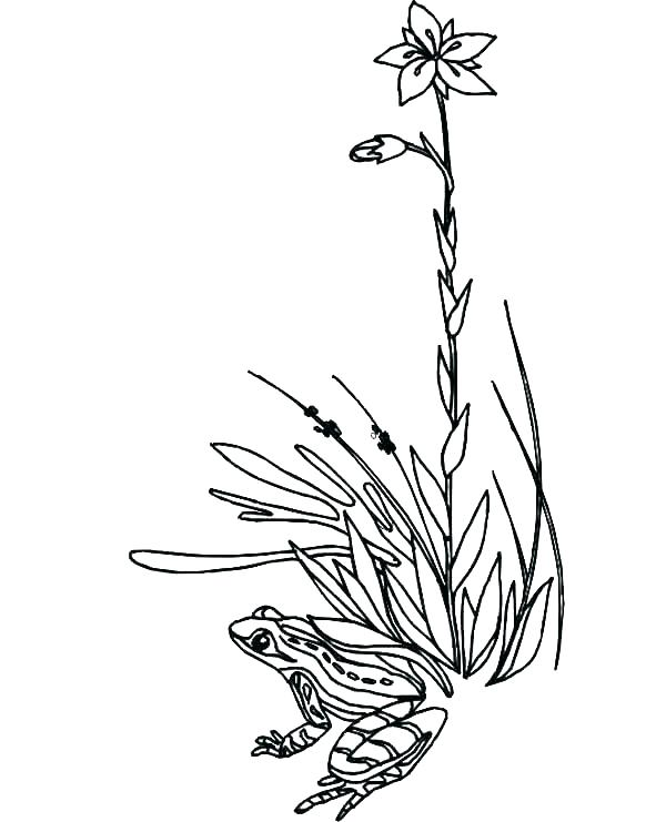 600x741 Grass Coloring Page Realitic Plant Grass And Flowers Coloring