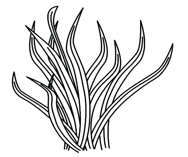600x504 Seagrass Coloring Pages