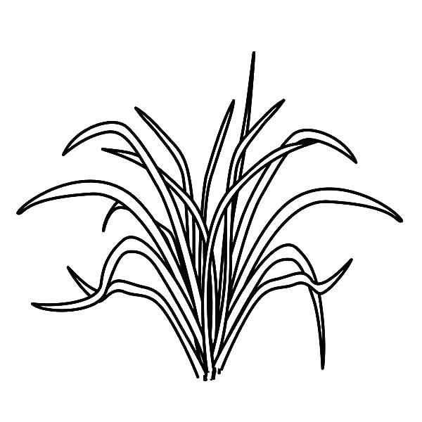 600x600 Grass Coloring Pages