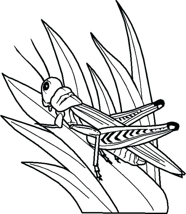 600x689 Coloring Pages Of Ants Grasshopper Coloring Pages Grasshopper
