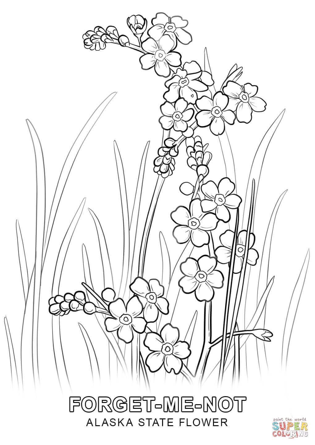 1020x1440 Grass Coloring Page Alaska State Flower Free Printable Pages